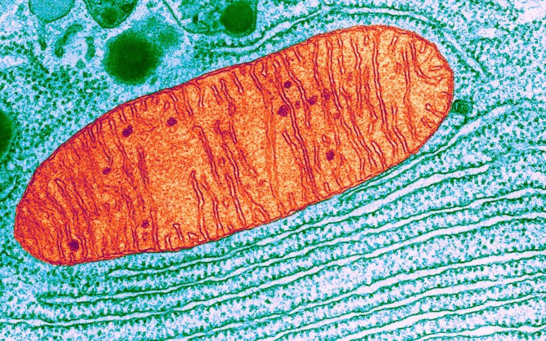 Protect Your Mitochondria, Protect Your Health