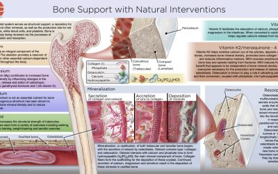 Build Bones Naturally with Crucial Nutrients